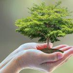 Treasure, Nurture & Protect Our Common Home